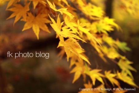 昇仙峡の秋
